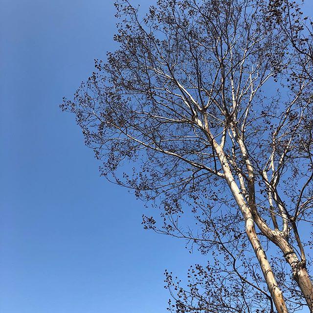 快晴 #sky #イマソラ #サルスベリ