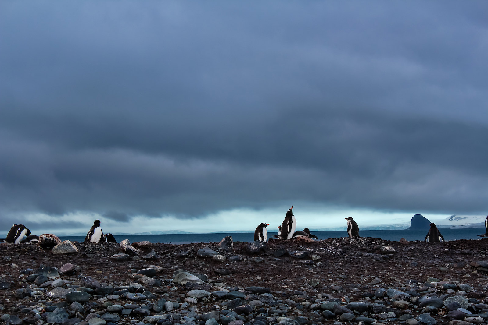 Stormy skies and penguins