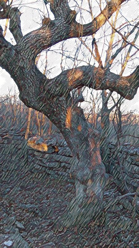 Jumping and Kicking Tree