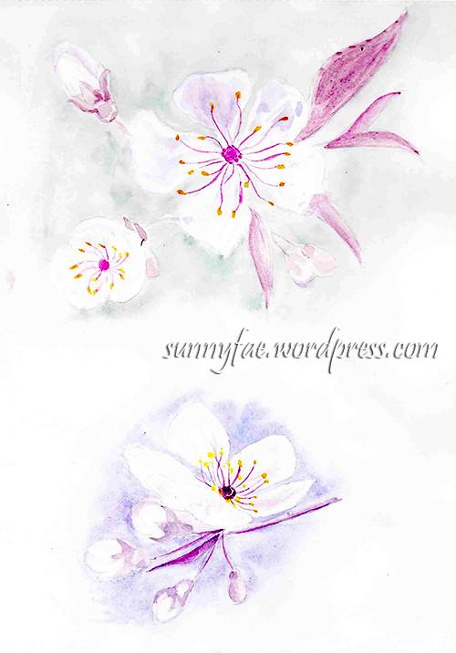 blossom sketch