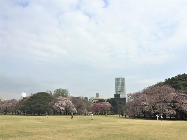 gyoensakura0401006