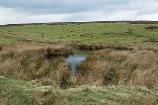 20170330-70_Dundale Pond - Levisham Moor
