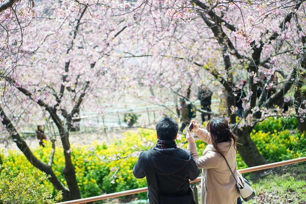 2018-02-27 松田の河津桜 002