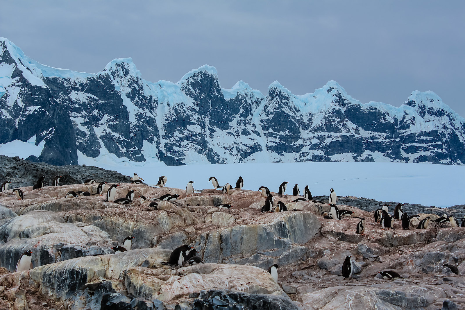 seven sisters and penguins
