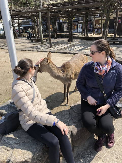 Trying to make more deer friends