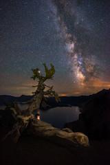 Crater Lake Twisty Tree