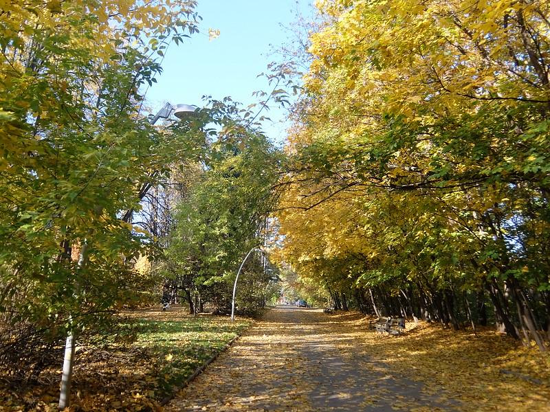 Москва - Воробьевы горы - Осенний лес