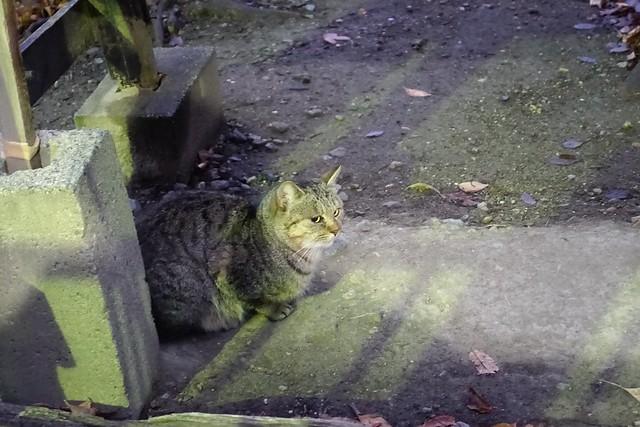 Today's Cat@2018-12-15