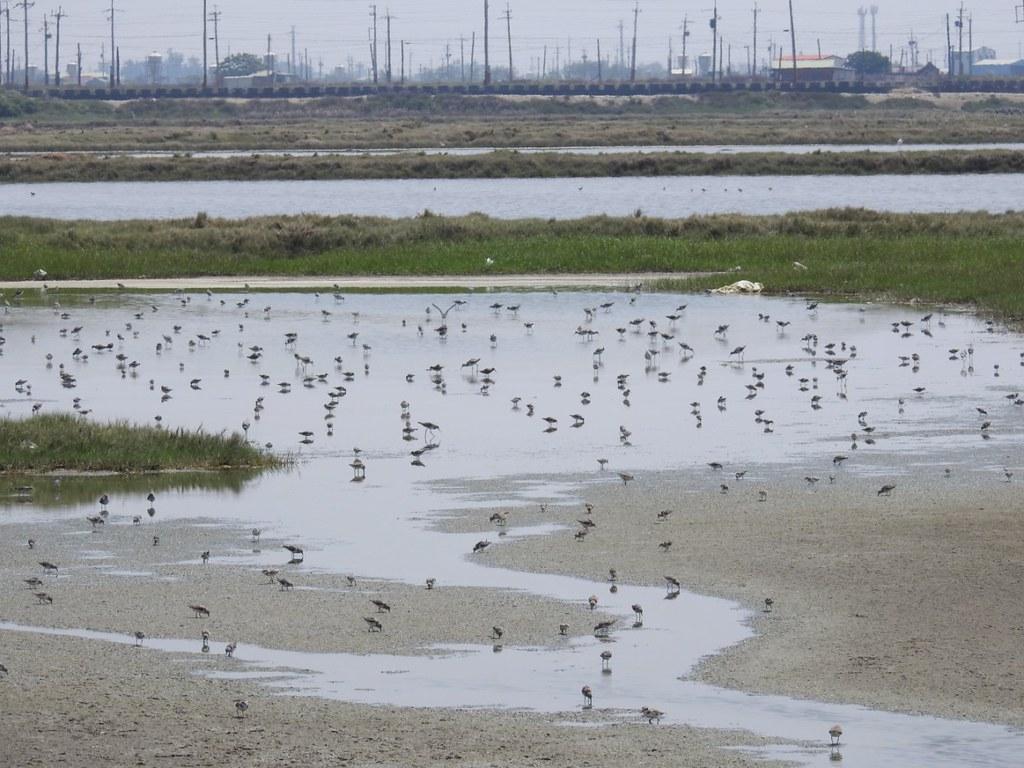 不同的水位適合不同的鳥類棲息,過高的水位反而不利鳥類棲息或覓食