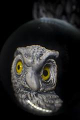 Owl lensball