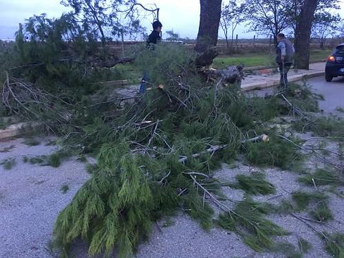 Danni vento a Casamassima (4)