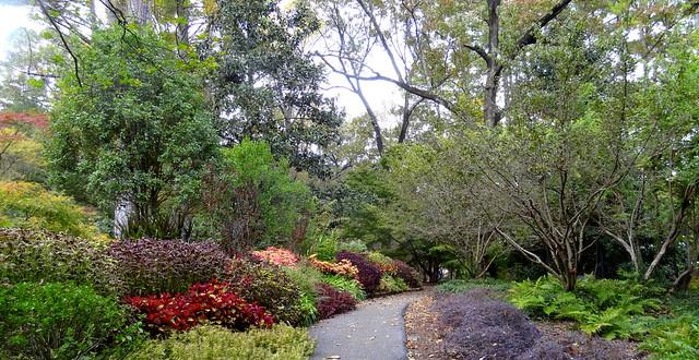 Birmingham Botanical Gardens, Sony DSC-HX10V