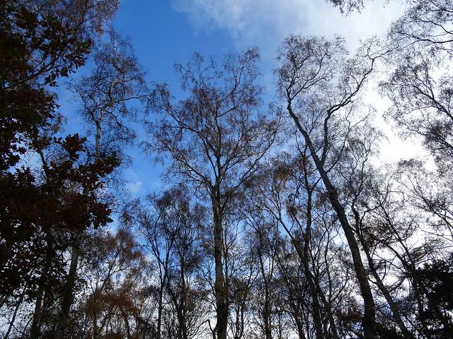 November Woodlands, Sony DSC-HX50