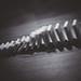 Domino effect - 345/365 (metaphor)