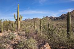 Tucson Scene