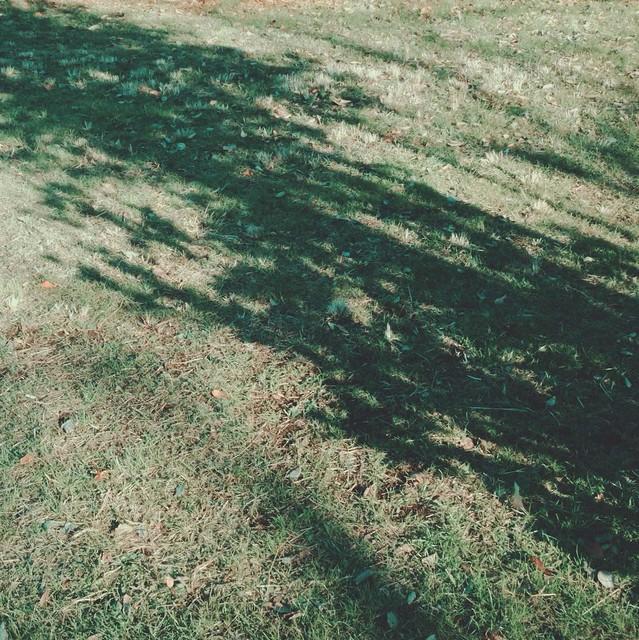 Tree shadow