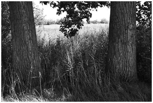 Trees - Bäume