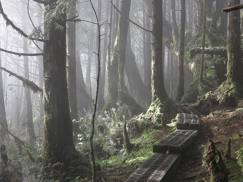 翠峰湖畔的檜木森林保有全台灣最美麗的寂靜,2018年這裡被定為台灣的寂靜山徑。范欽慧提供。