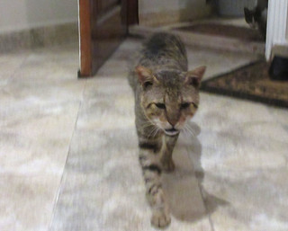 cats-Cinder-1