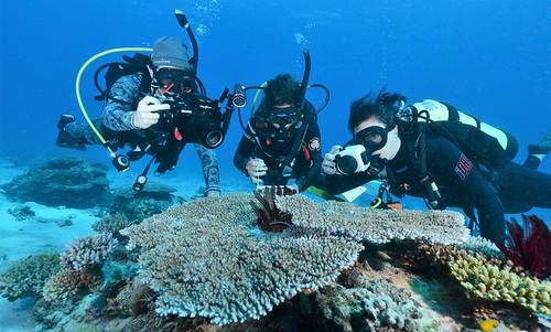 Virtual Reef Diver phase 2 b