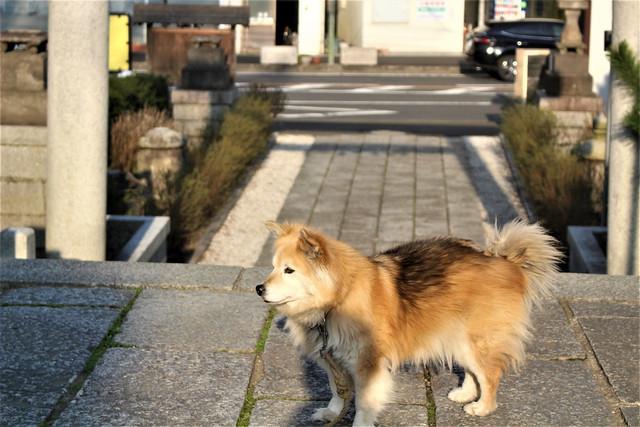 wakeikazuchi-gosyuin013