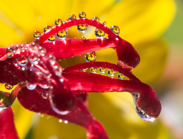 Flowers in drops on, Canon EOS 600D, Tamron 16-300mm f/3.5-6.3 Di II VC PZD Macro