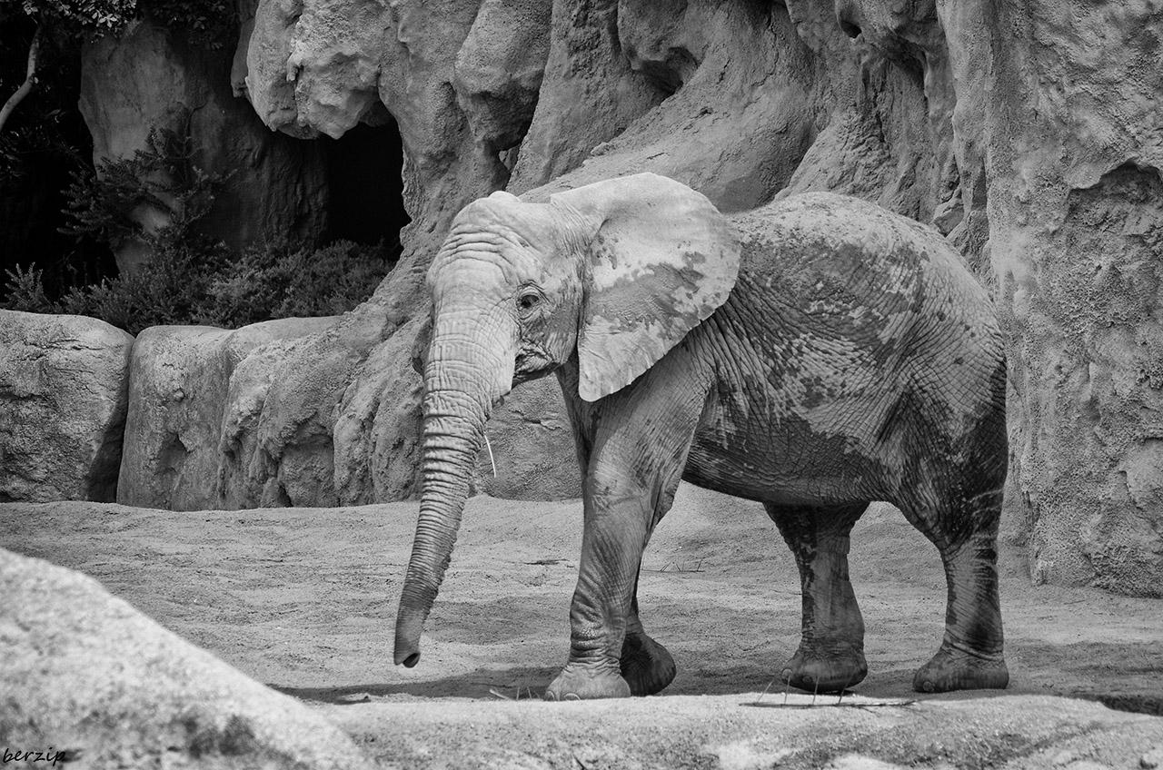 Zoos / Parcs animaliers - Page 26 32066034097_5b3c511b43_o