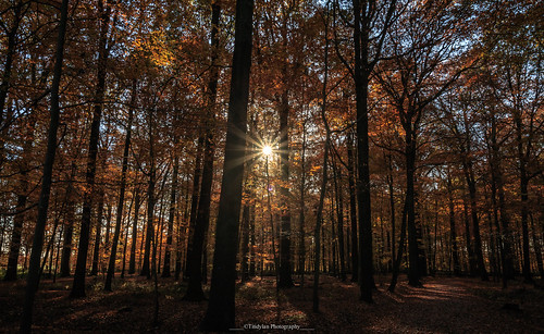 Lights in the forest 6