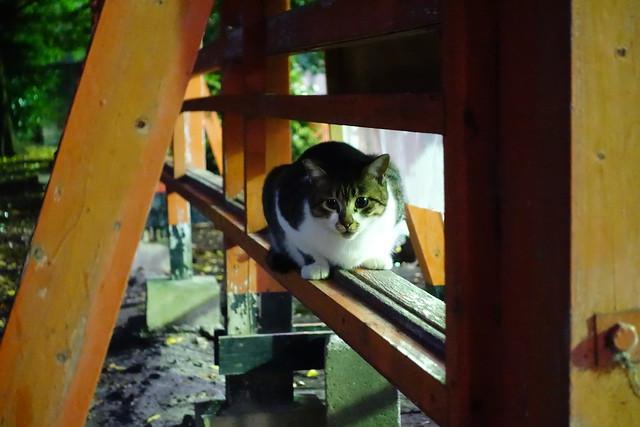 Today's Cat@2018-12-03