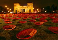 Never again - Mohnblumen auf dem Königsplatz