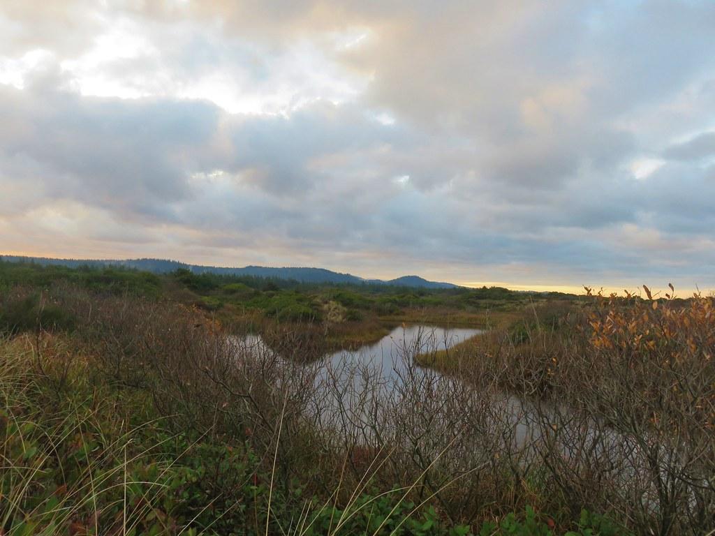 Waxmyrtle Marsh