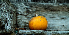 hórreo y calabaza /  horreo and pumpkin
