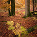 Autumn Leaves by Capturing The Elements