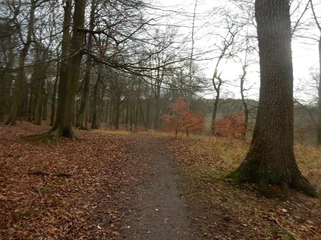 Winter woods Little Kimble to Saunderton
