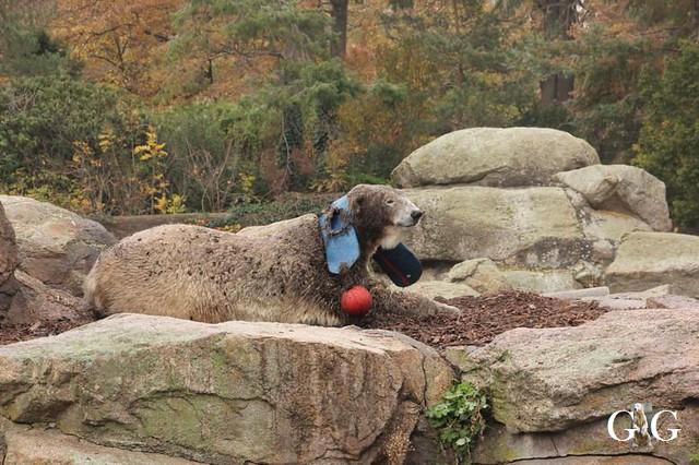 Besuch Zoo Berlin 11.11.201832