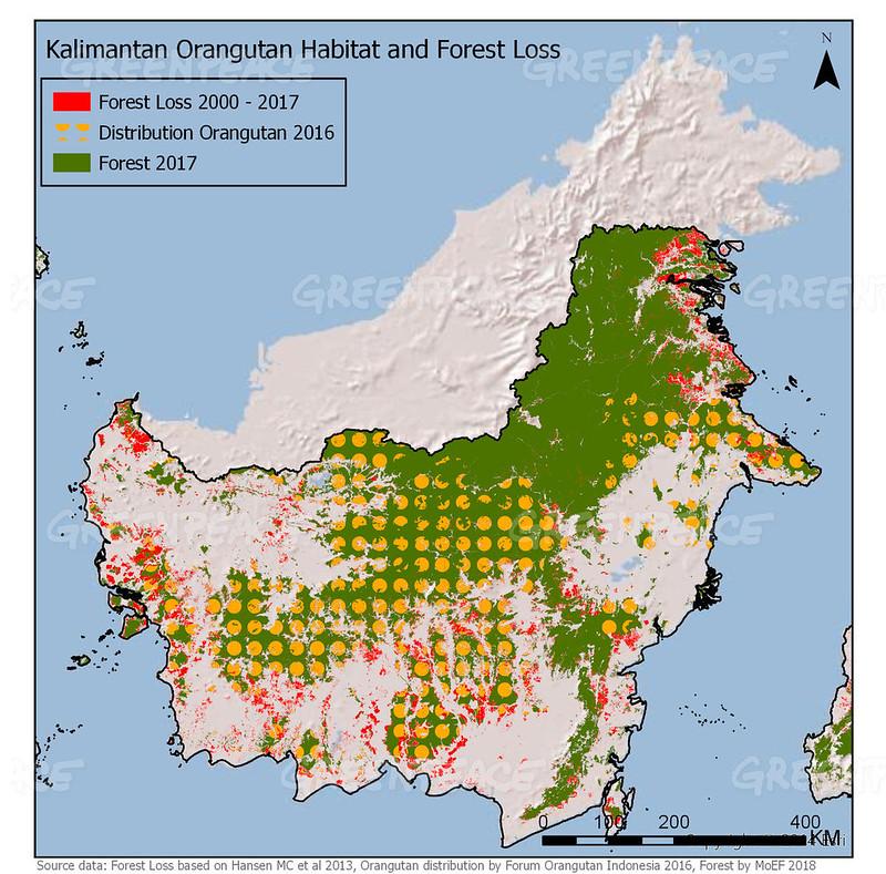 加里曼丹的雨林砍伐、紅毛猩猩棲地消失示意圖
