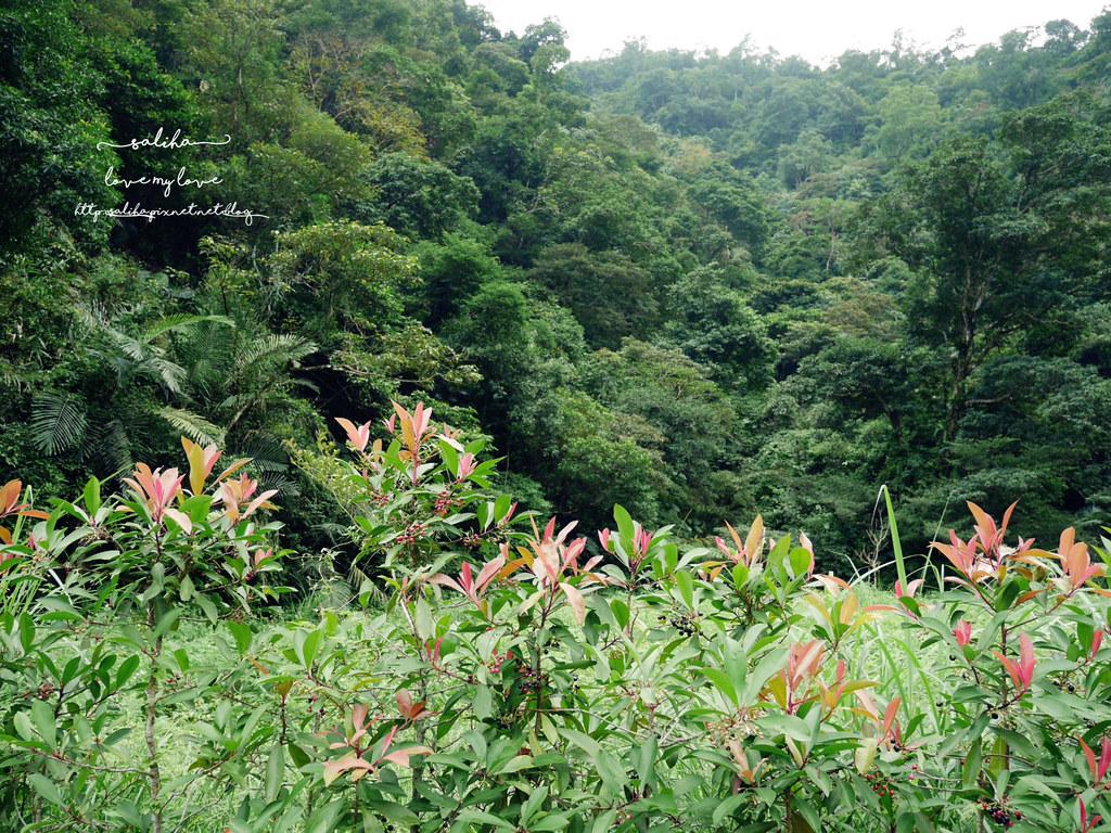 宜蘭冬山鄉附近一日遊景點推薦新寮瀑布