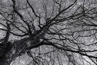 Tree trunk, branches and twigs.