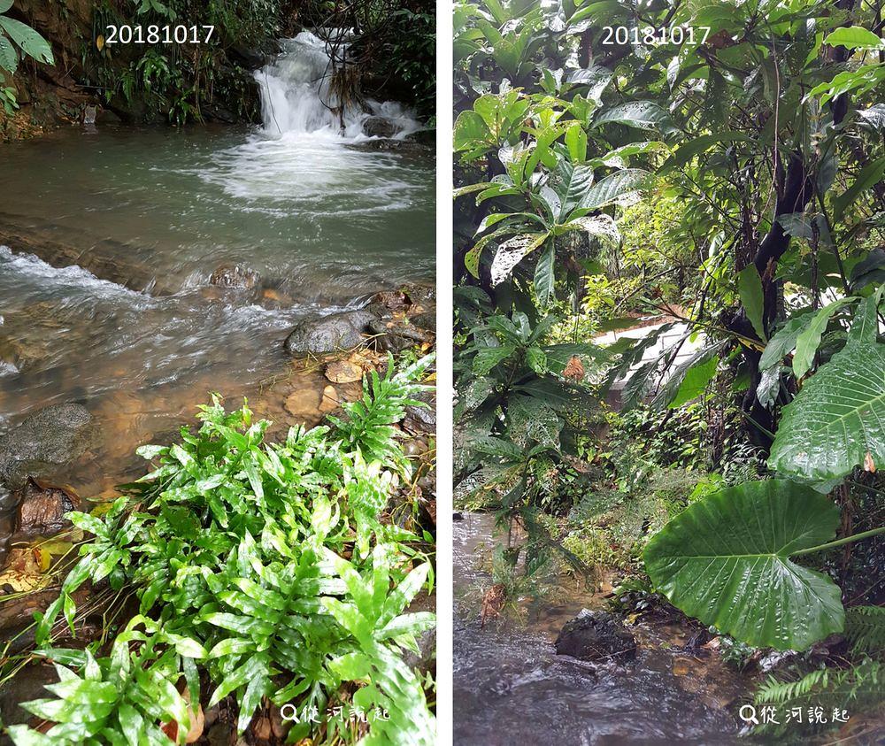 3_(右圖)水冬瓜及穗花棋盤腳組成的溪畔林,(左圖)灘地上的橢圓線蕨以及雨後的小瀑與水潭。