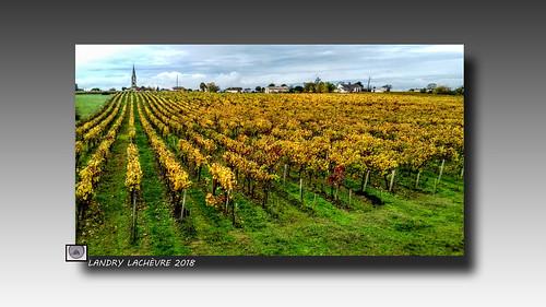 Vigne Prignac et Marcamp