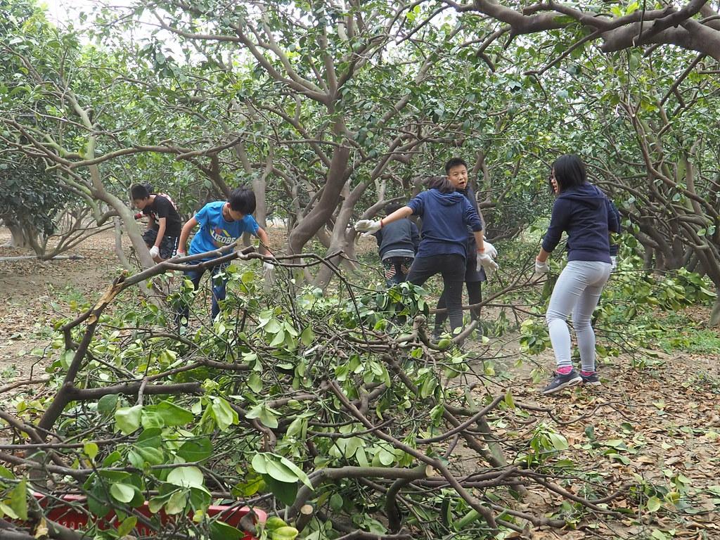 麻豆食農教育 (10)