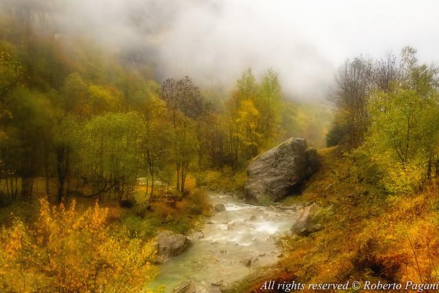 Mountain stream among fall colors