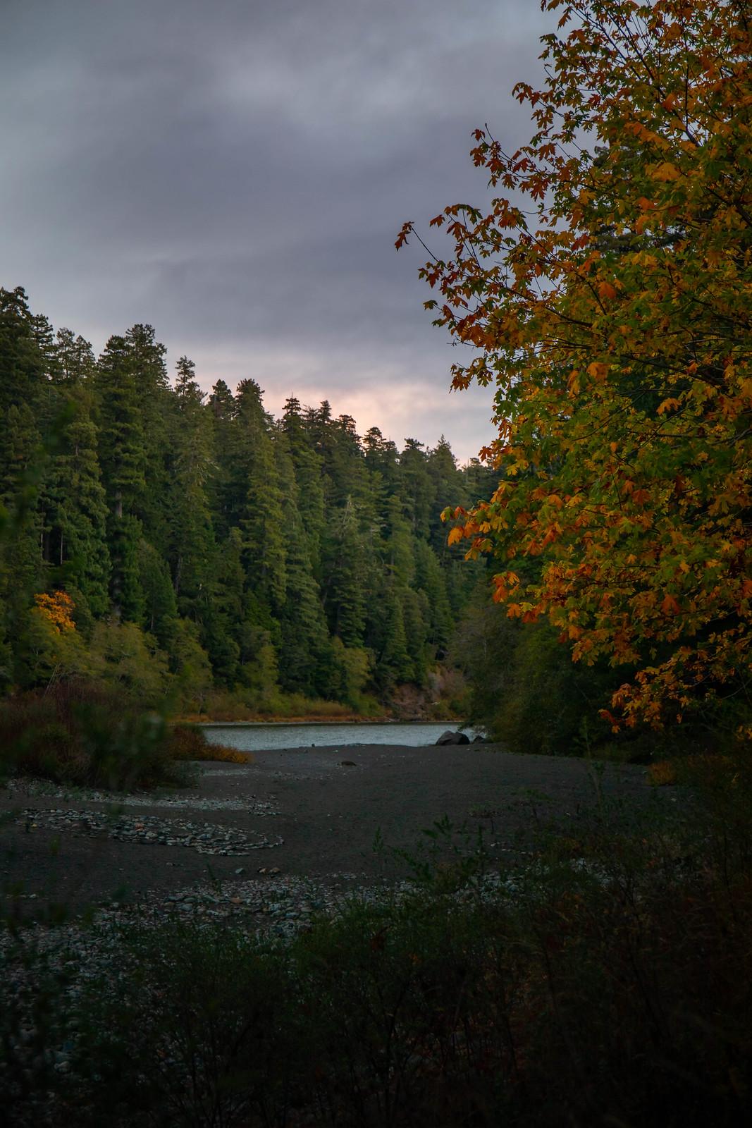 11.04. Jedediah Smith Redwoods State Park