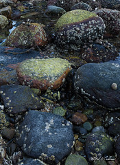 Boulders and Barnacles_27A7521-7531_Focus Stack
