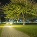 Night Park