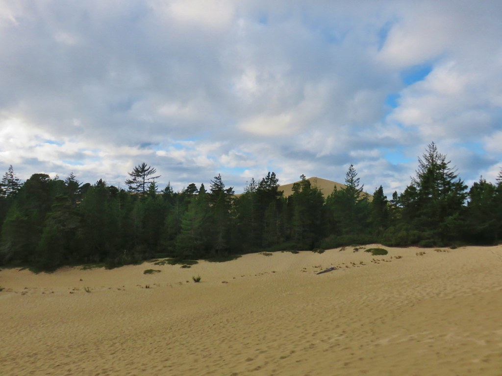 Dune in Jessie M. Honeyman State Park