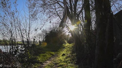 River path, River Mourne, Strabane 18 Nov 2018 DSC_0372