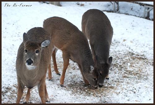 2018-12.deer.trio.1