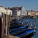 "Venice Black Swans. ""Черные лебеди"" Венеции by atardecer2018"