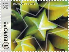 09 Géométrie dans la nature-étoil-timbD